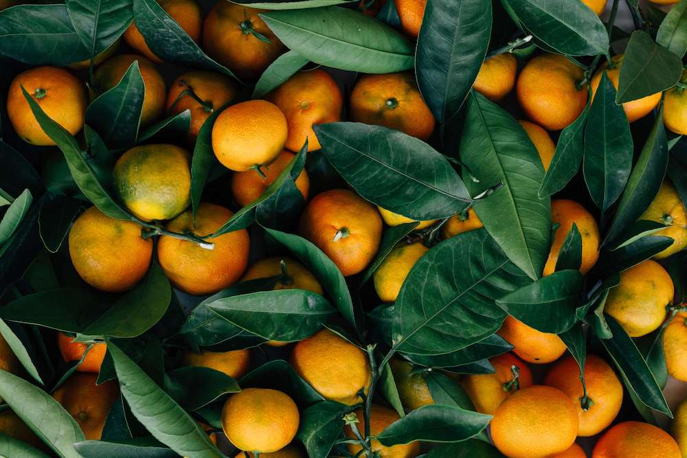 arancia-federica-portuese-biologa-nutrizionista-catania